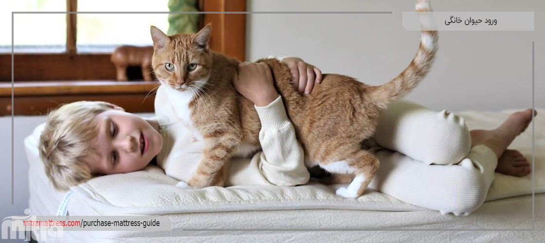 ورود حیوان خانگی